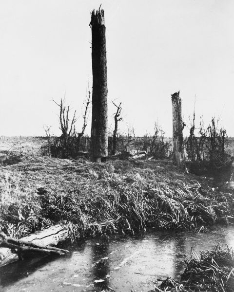 A steel tree used as an observation post by the Australian forces at the Battle of Messines, Western Front, Belgium during World War I in 1917