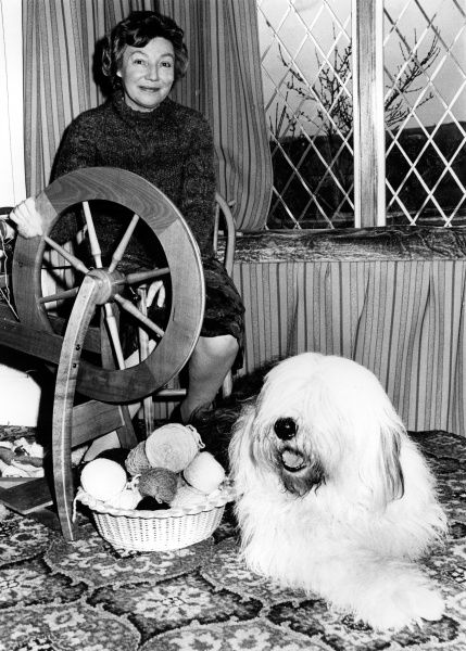 An Old English Sheepdog with its enterprising owner, who has spun its coat into balls of wool for knitting