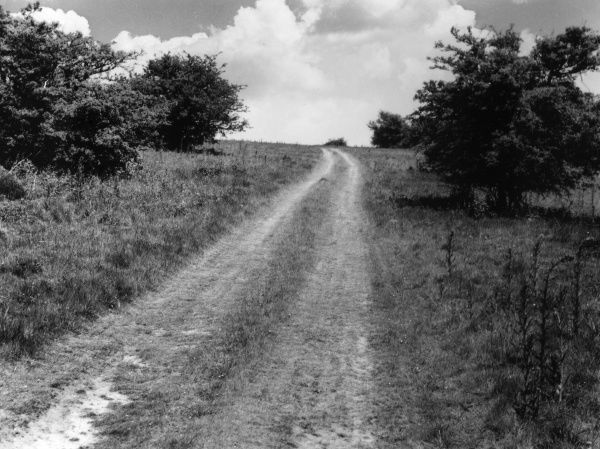 A rural stretch of the great Roman road of Stane Street, a military road built across the forest of Anderida to link Regum (Chichester) with Londinium (London). Date: 1950s