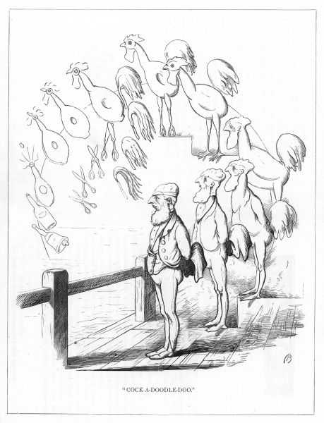 'Cock-a-doodle-do'. Satire on Darwin's 'Origin of Species' showing the evolution of man on holiday from a cock