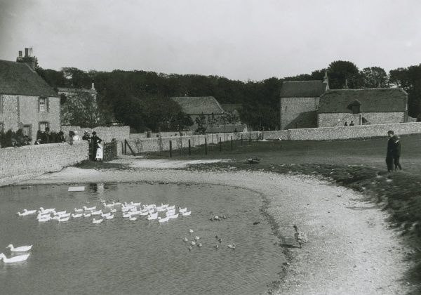 Ducks and ducklings on the village pond at Ovingdean, Sussex. Date: circa 1900