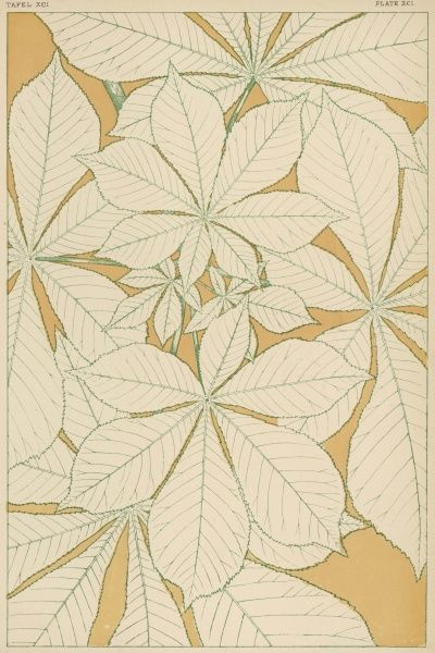Full-sized horse-chestnut leaves, traced from nature