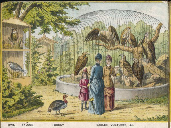 Regent's Park zoo, London Visitors admire owl, falcon, eagle, vultures and other birds