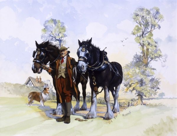 A pair of working Shire Horses, Farmer and Collie dog. Painting by Malcolm Greensmith
