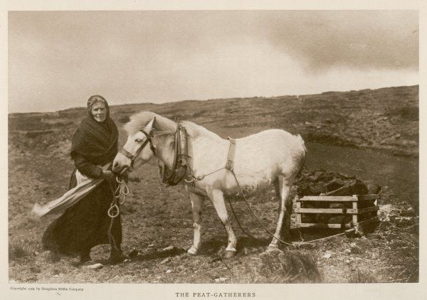 An old woman gathering bricks of peat and transports it in a cart pulled by a grey pony