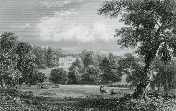 Deer in the park of Peper Harow, Surrey Date: early 19th century