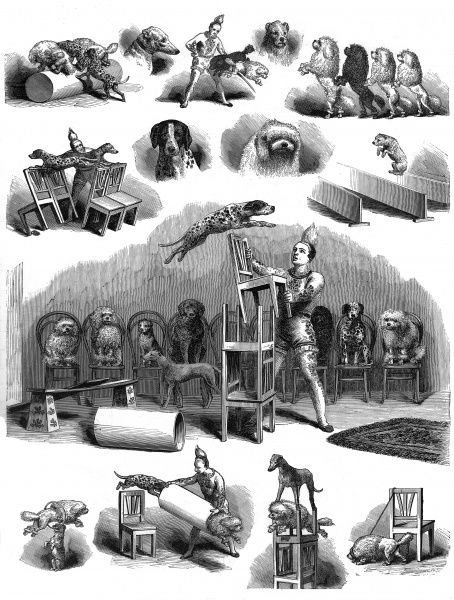 Full page engraving illustration showing the performing dogs at the Westminster Aquarium performing various tricks