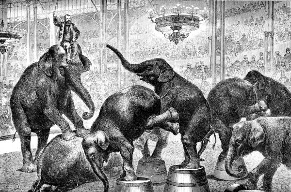 Engraving showing a number of elephants performing tricks during a circus show in 1876