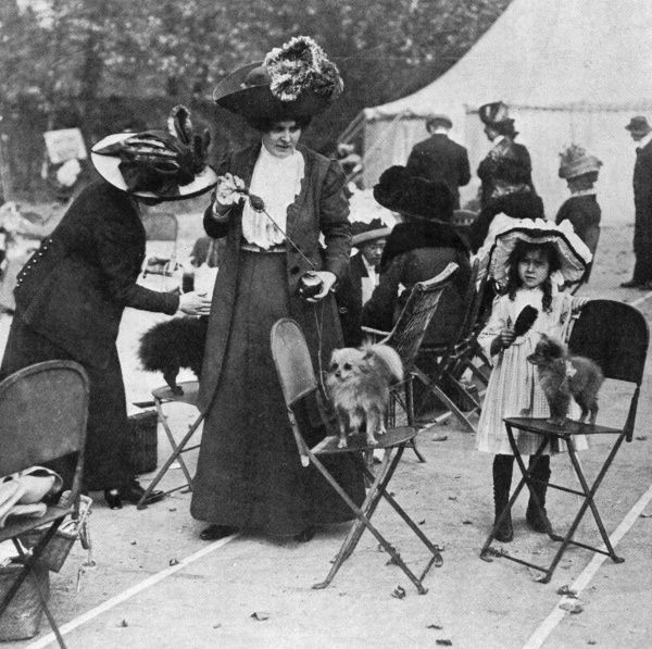 A patient Pomeranian stands on a folding chair while being squirted with perfume at the Ealing and District Canine Society dog show. Date: 1911