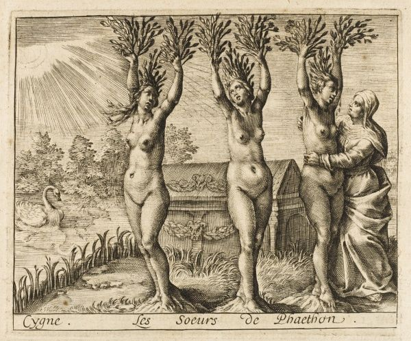 Mourning their brother Phaeton, Phaetusa, Lampetia and Lampetusa are changed into poplar trees, while his friend Cygnus is turned into a swan