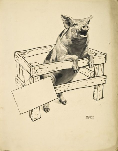 A Pig rears up out of a small pen. Pen and Ink (with watercolour)drawing by Raymond Sheppard