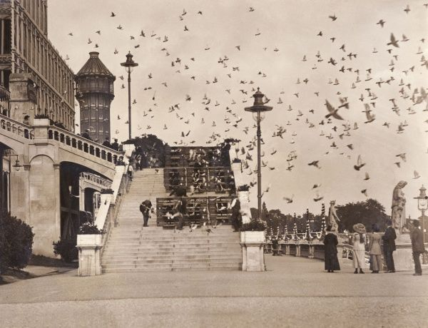 15,000 birds from all parts of England and Scotland are released from Crystal Palace, south London, at the start of a championship pigeon race
