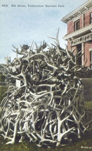 Pile of elk horns in front of the post office - Yellowstone National Park. Date: circa 1910