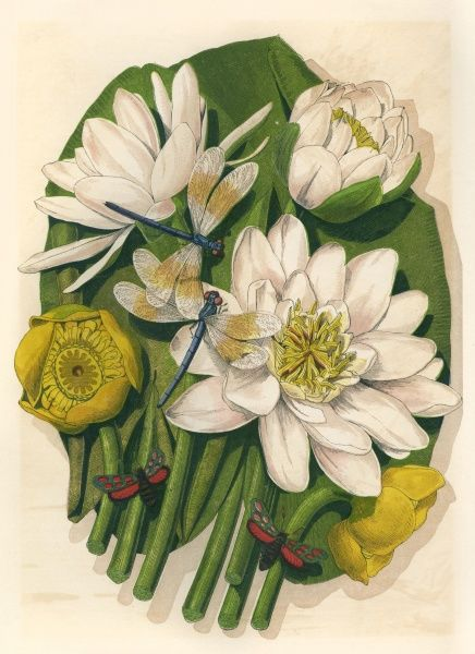 WATER LILIES Date: 1867
