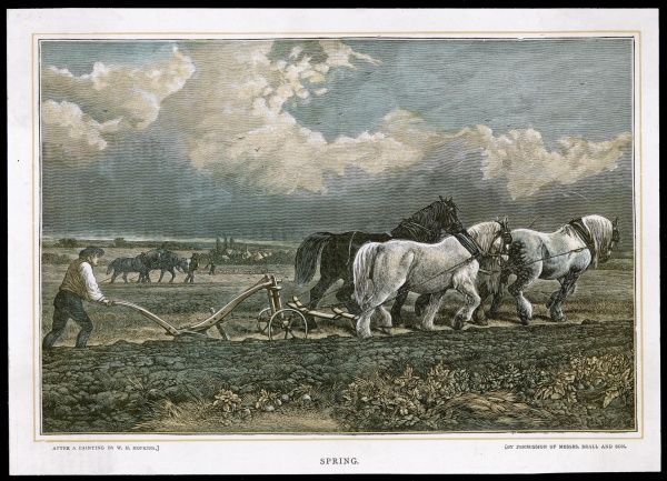 Ploughing with a three-horse team