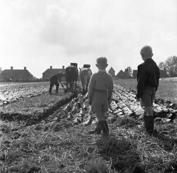 A ploughing Match at Wivelsfield, West Sessex, England. Two young boys in Wellington boots, stand into the sun and watch a farmer as he ploughs with the aid of two Shire horses