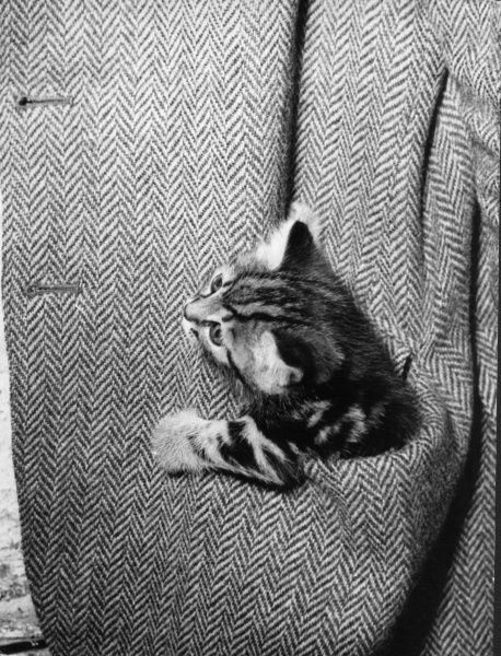 A kitten small enough to fit into a jacket pocket! Date: 1960s