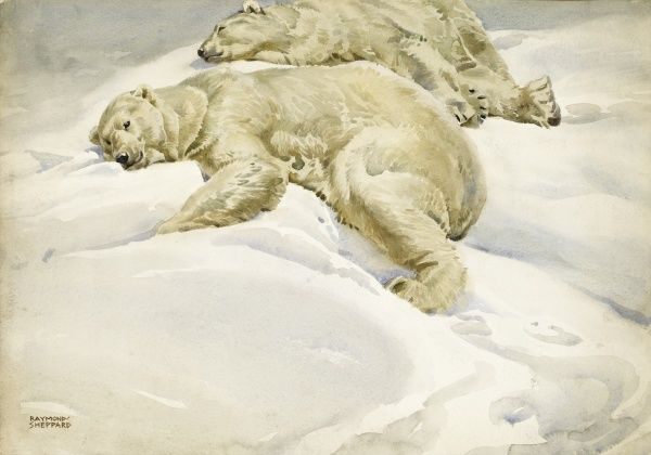 Two Polar bears resting in the Arctic snow. Watercolour painting by Raymond Sheppard