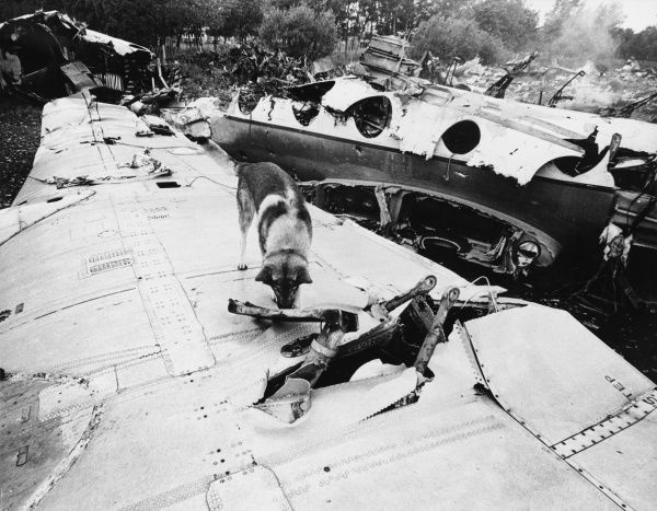 Rusty the Alsatian searches a vast pile of wreckage for the vital black box, following a plane crash. Date: 1960s
