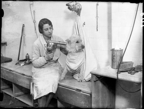 A lucky dog gets a shampoo and set at the Dogs Bath Club