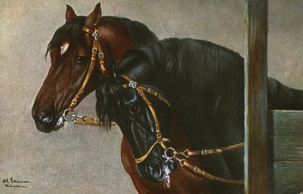 Portrait of two horses (one black and one brown) wearing simple snaffles. Date: 1908