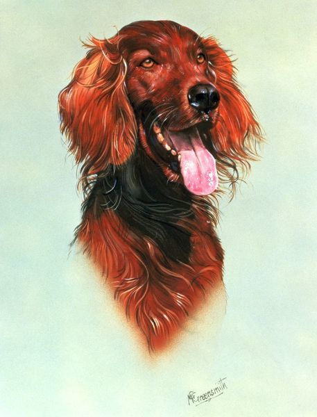 A very fine detailed portrait of a Red Setter dog. Painting by Malcolm Greensmith