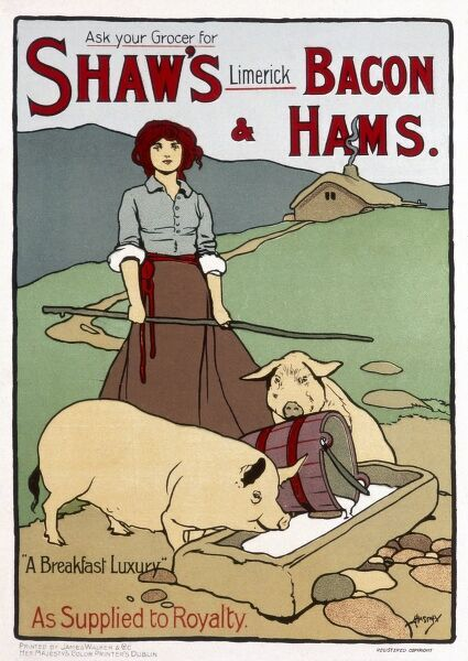 Poster advertising Bacon and Ham from Shaw's of Limerick. A breakfast luxury, as supplied to royalty