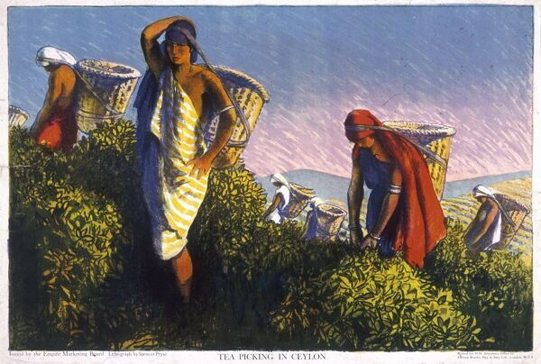 Poster for the Empire Marketing Board, depicting women picking tea in Ceylon