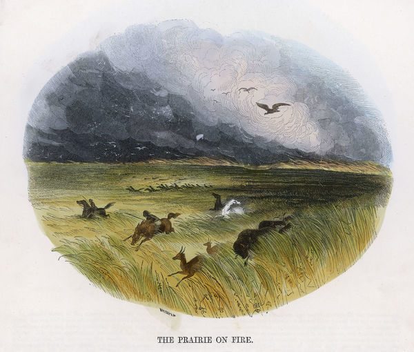 Animals and people on horseback flee before a raging prairie fire in the American West