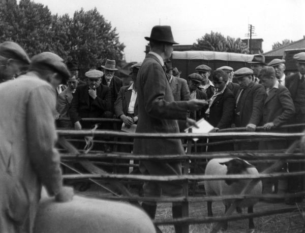 The auctioneer asks for bids during a Prize Sheep Sale at Ipswich Cattle Market, Ipswich, Suffolk, England. Date: 1930s