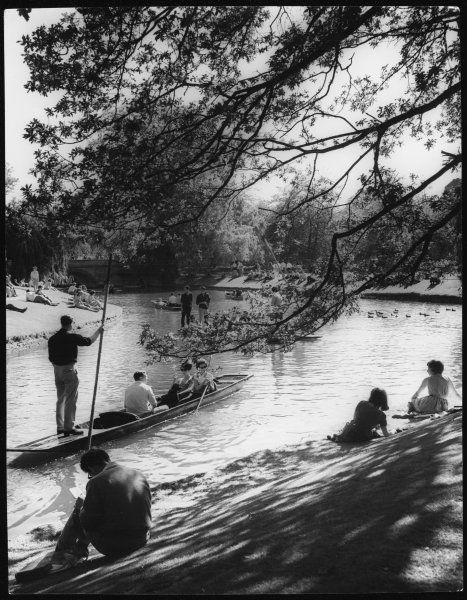 Leisure days, a summer scene showing students punting on the River Cam, on the Backs, Cambridge, England