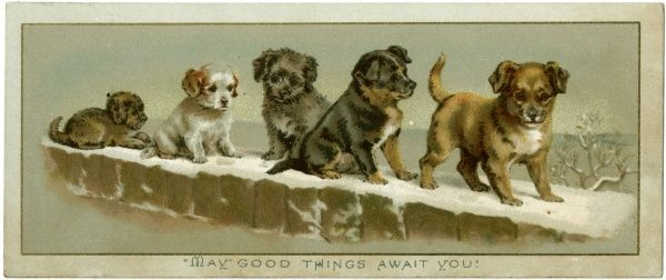 Five puppies on a snowy wall. Date: circa 1890