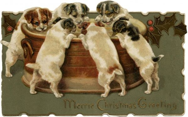 Six terrier pups peer into a bran tub, wondering what's in it for them ? Date: 1890s