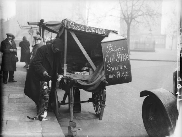 'Pussy's butcher.' A street trader sells cat food from his cart. He feeds a scrap to passing cat who stands on its hind legs to reach
