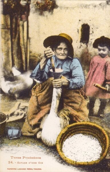 Pyrenean Woman force-feeding a goose in order to fatten up the liver of the bird for making foie gras pate. Date: circa 1910s