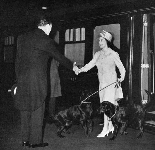Queen Elizabeth II is greeted on her return to London from Balmoral accompanied by two black labradors. Date: 1963