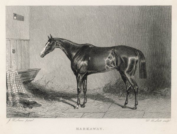 A portrait of the racehorse Harkaway, who won the 1838 Goodwood Cup, in his stable