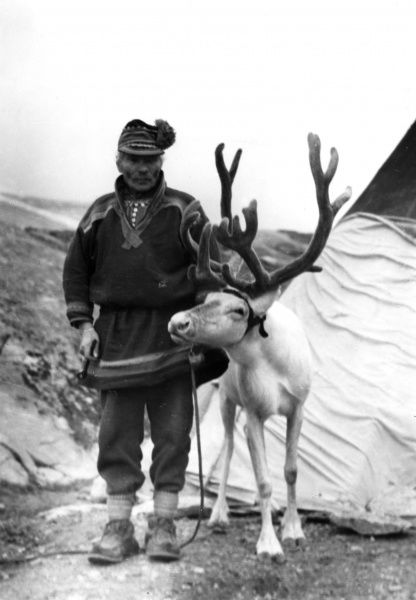 In summer Laplanders live in tents, moving from pasture to pasture with their reindeer. The reindeer move in vast herds, often many thousand strong. Date: 1930s