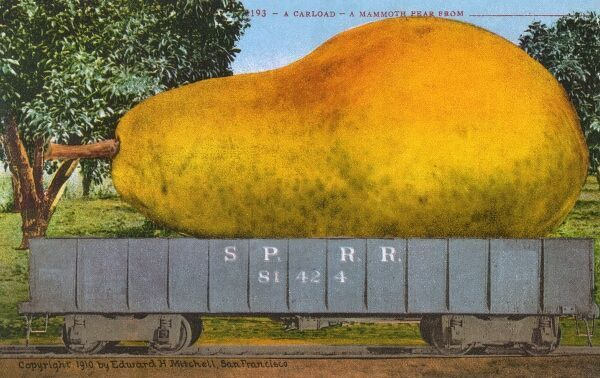 Rail car transporting a giant pear Date: 1910