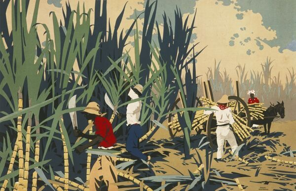 Poster for the Empire Marketing Board, depicting the reaping of sugar cane in the West Indies