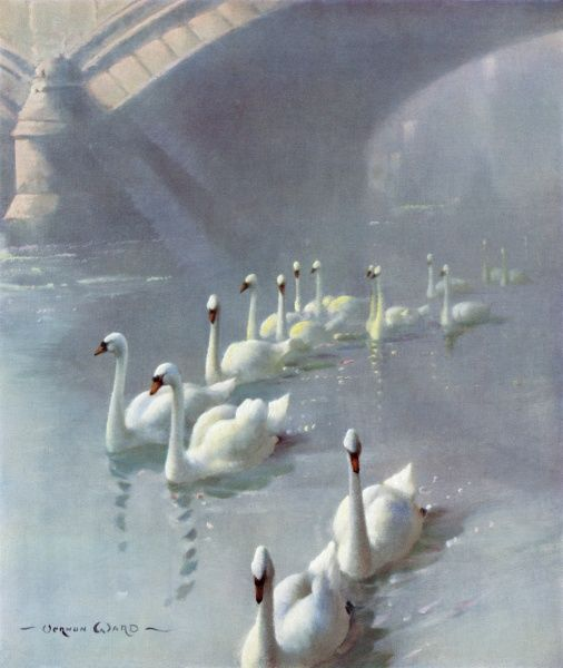 A slow procession of swans on a winter's evening drifting downstream on the Thames tide
