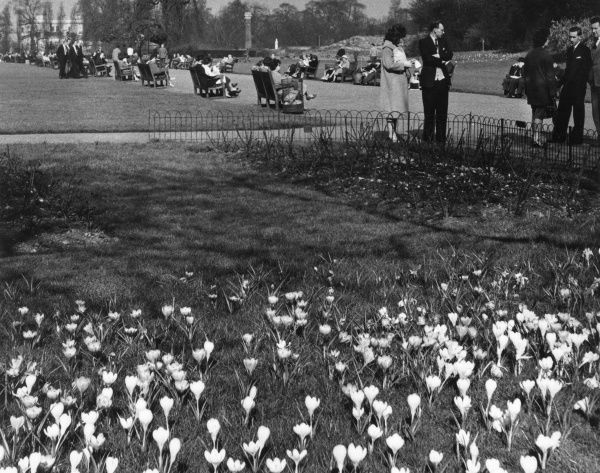 Visitors to Regent's Park, London, chatting and relaxing on benches on a spring day. Date: 1950s