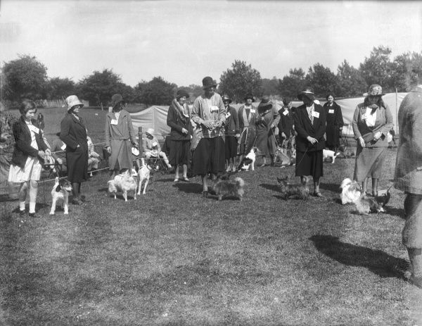 A dog show in Regent's Park, London