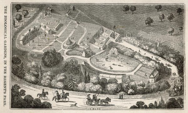 Regent's Park, London : a bird's eye view of the gardens of the Zoological Society, which were opened to Fellows of the Society in 1828, and became a popular attraction