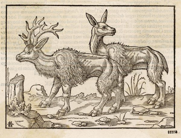 Male and female reindeer, finely engraved by a 16th century artist