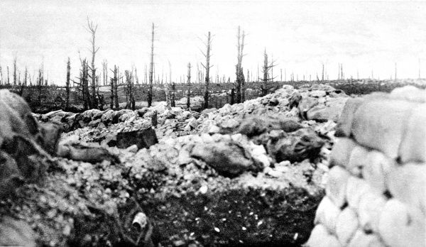 A photograph showing the remains of Thipval wood, destroyed by Allied artillery, on the Western front during the First World War&quot