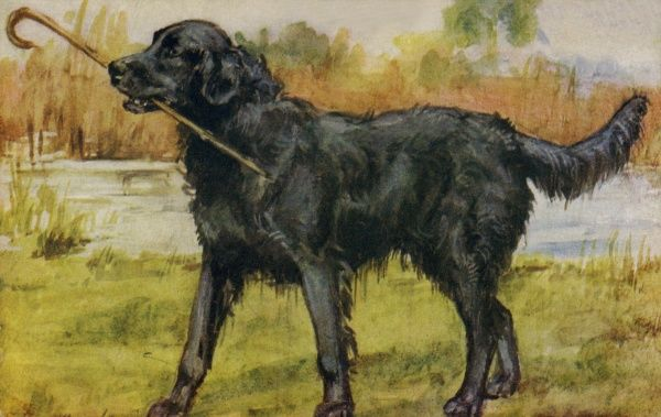 Retriever. Artist: Eileen Hood. Watercolour of black retriever by the water's edge holding his master's walking stick Date: circa 1922