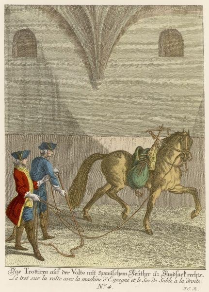 Haute Ecole : Training a horse to the Vaulting Trot with a sandbag to simulate weight of rider