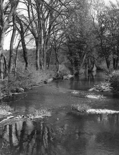 An early Spring view of the River Mole, near Box Hill, Surrey, England. Date: 1950s