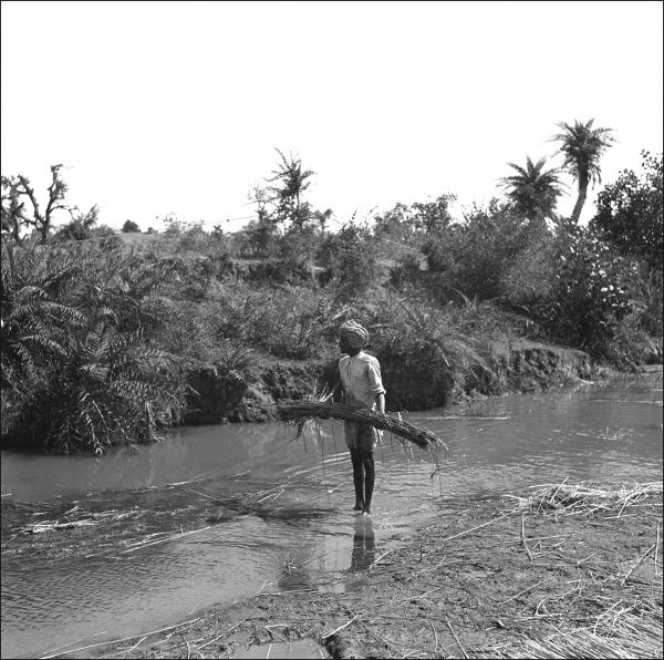 A Pakistani man gathering tall reeds/rushes growing alongside a small stream. Photograph by Ralph Ponsonby Watts